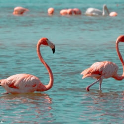 Rio Lagartos Flamingos and Las Coloradas